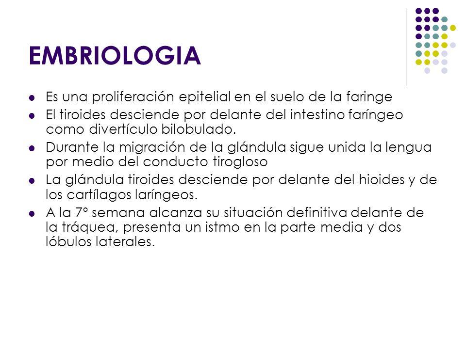 EMBRIOLOGIA Es una proliferación epitelial en el suelo de la faringe