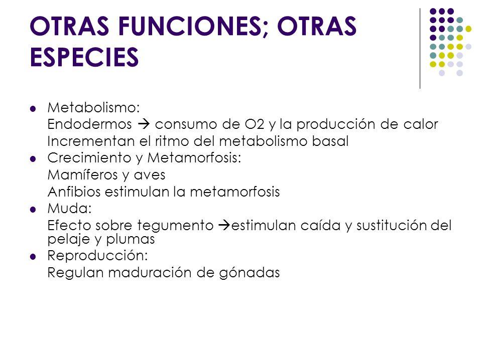 OTRAS FUNCIONES; OTRAS ESPECIES