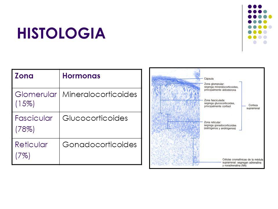 HISTOLOGIA Zona Hormonas Glomerular (15%) Mineralocorticoides