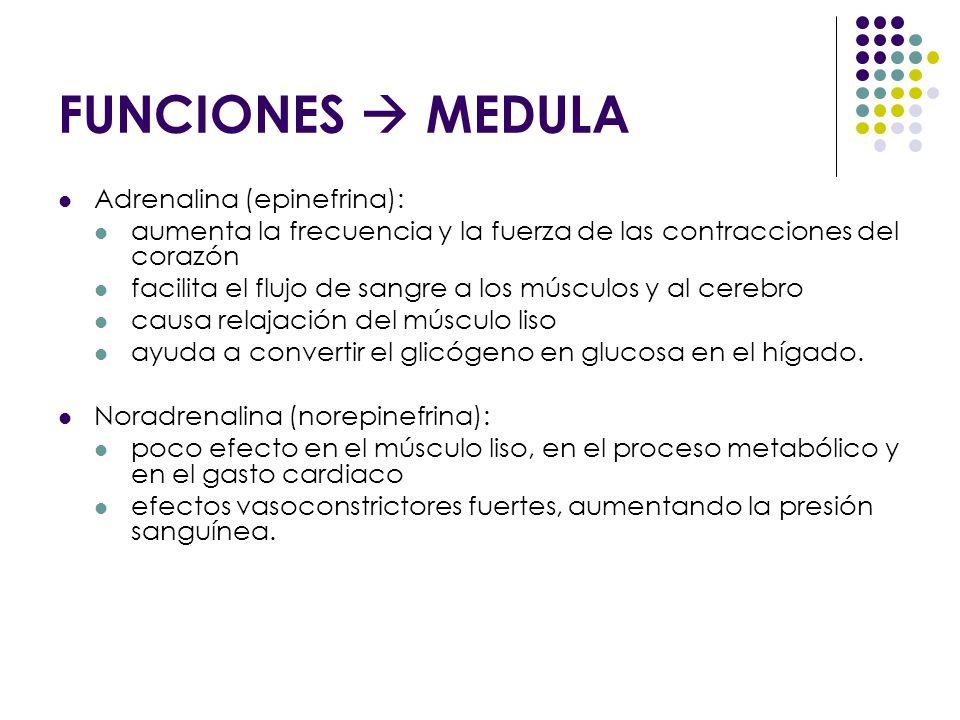 FUNCIONES  MEDULA Adrenalina (epinefrina):