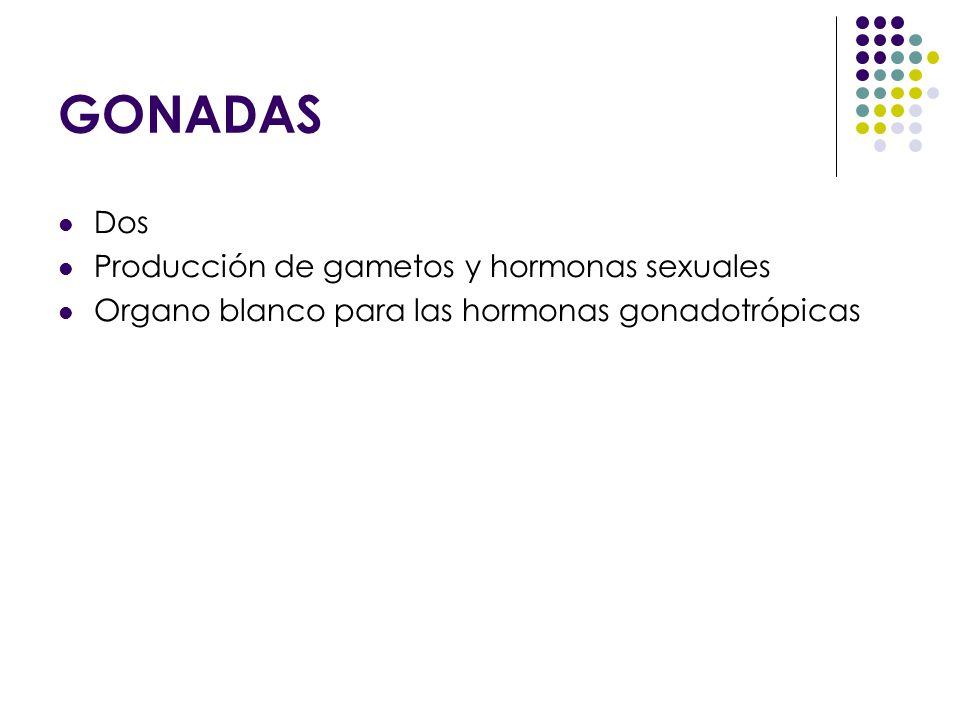 GONADAS Dos Producción de gametos y hormonas sexuales