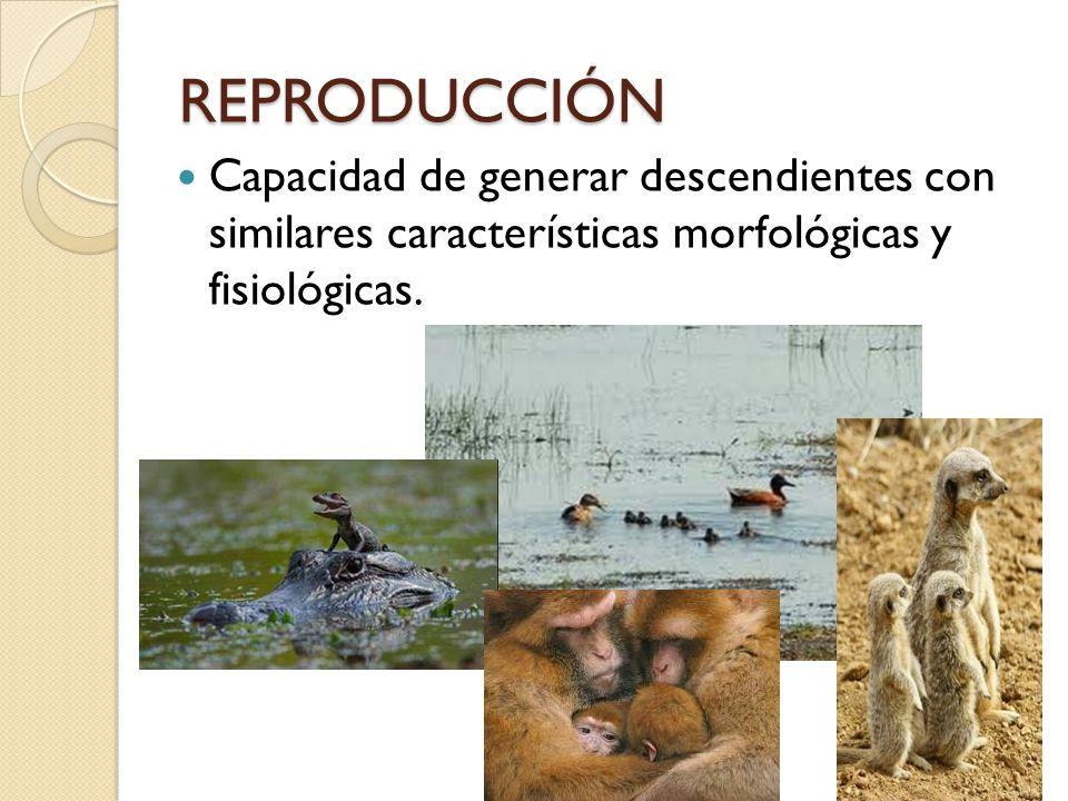 REPRODUCCIÓN Capacidad de generar descendientes con similares características morfológicas y fisiológicas.