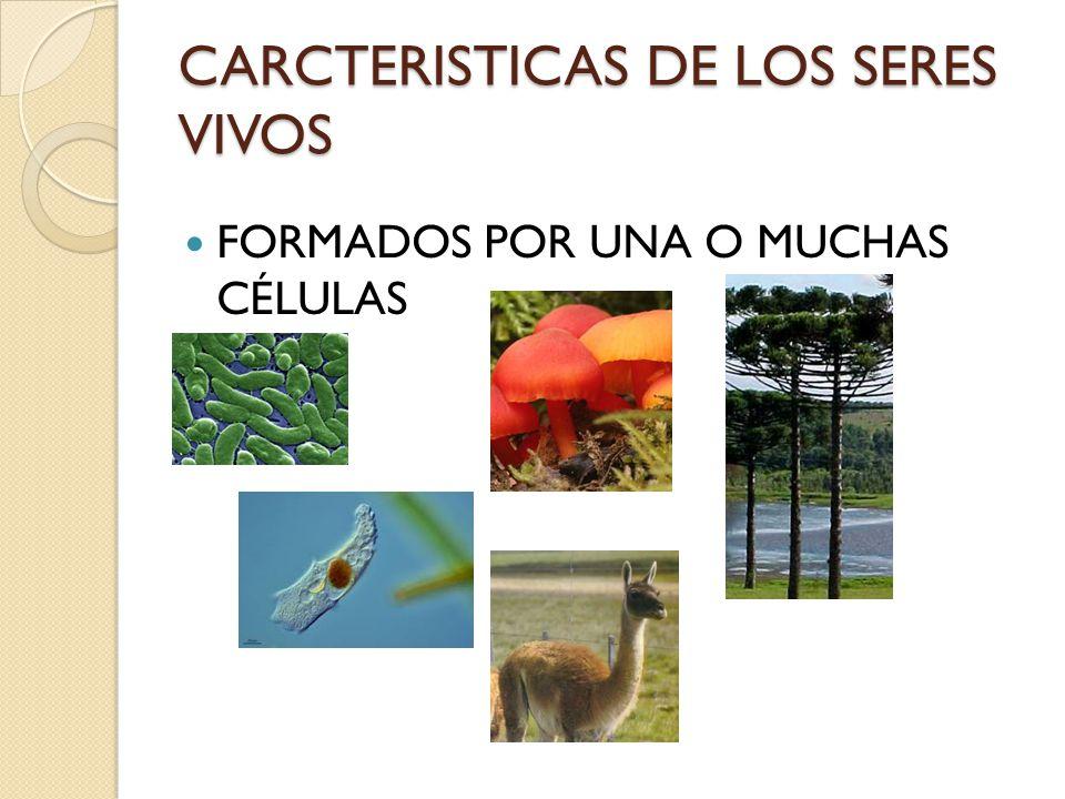 CARCTERISTICAS DE LOS SERES VIVOS