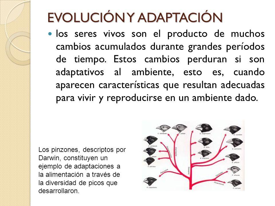 EVOLUCIÓN Y ADAPTACIÓN