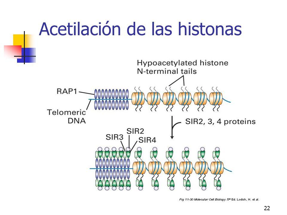 Acetilación de las histonas