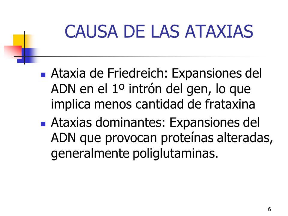 CAUSA DE LAS ATAXIAS Ataxia de Friedreich: Expansiones del ADN en el 1º intrón del gen, lo que implica menos cantidad de frataxina.