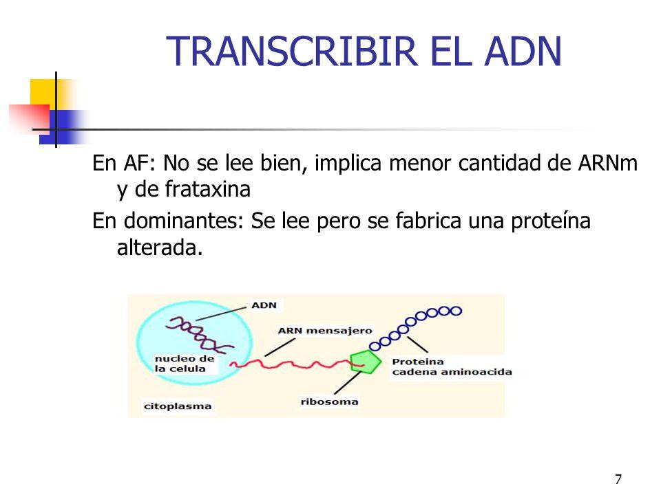 TRANSCRIBIR EL ADN En AF: No se lee bien, implica menor cantidad de ARNm y de frataxina En dominantes: Se lee pero se fabrica una proteína alterada.