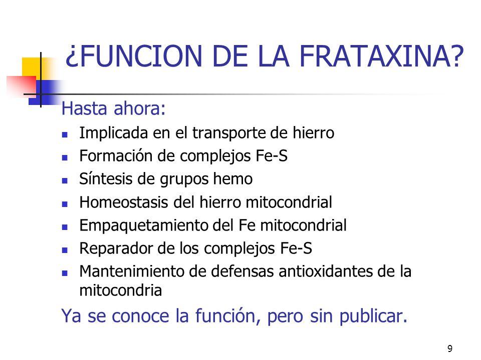 ¿FUNCION DE LA FRATAXINA