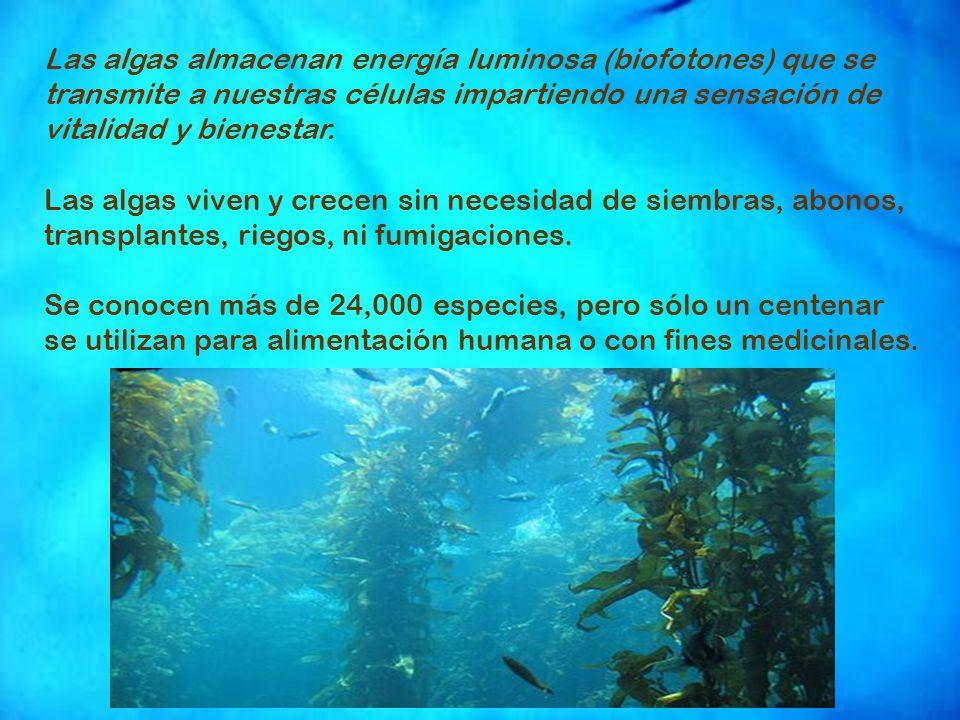 Las algas almacenan energía luminosa (biofotones) que se transmite a nuestras células impartiendo una sensación de vitalidad y bienestar.