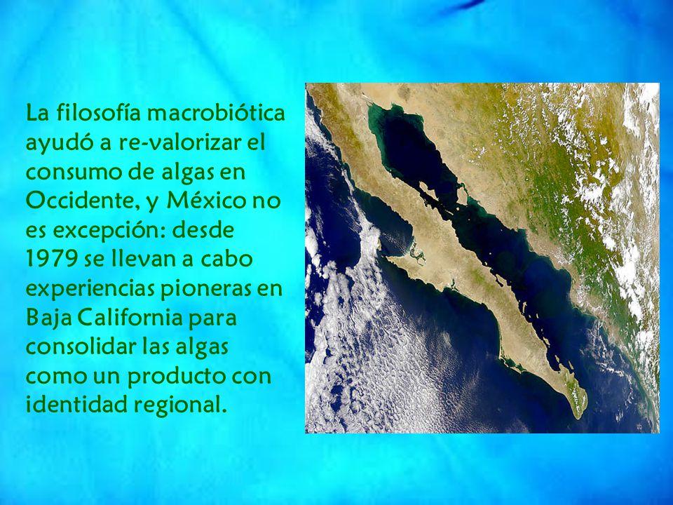 La filosofía macrobiótica ayudó a re-valorizar el consumo de algas en Occidente, y México no es excepción: desde 1979 se llevan a cabo experiencias pioneras en Baja California para consolidar las algas como un producto con identidad regional.