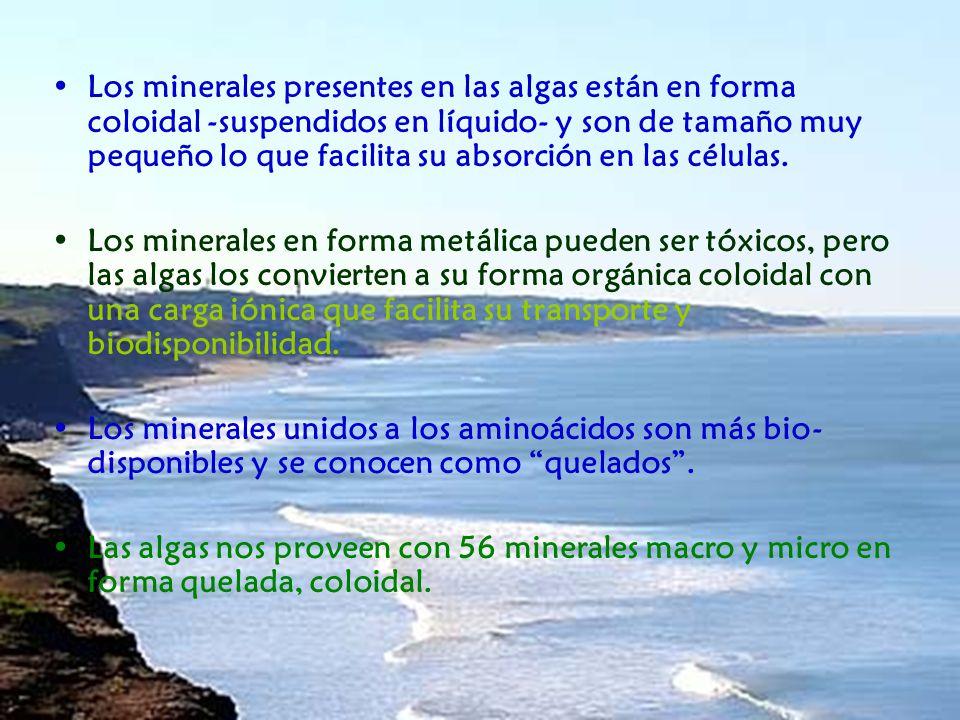 Los minerales presentes en las algas están en forma coloidal -suspendidos en líquido- y son de tamaño muy pequeño lo que facilita su absorción en las células.