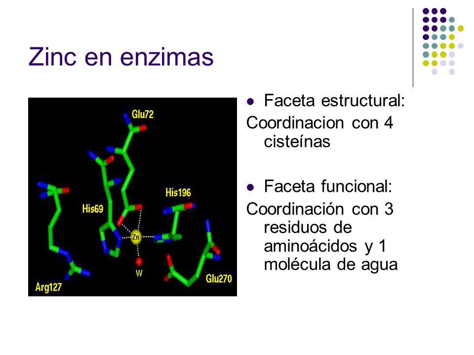 Zinc en enzimas Faceta estructural: Coordinacion con 4 cisteínas