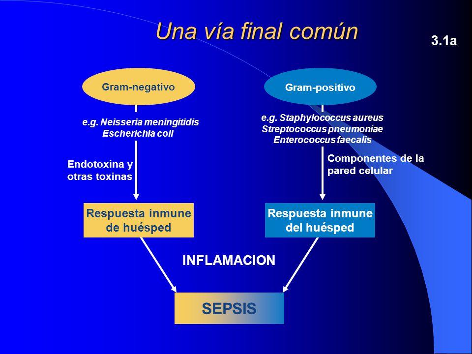 Una vía final común SEPSIS 3.1a INFLAMACION