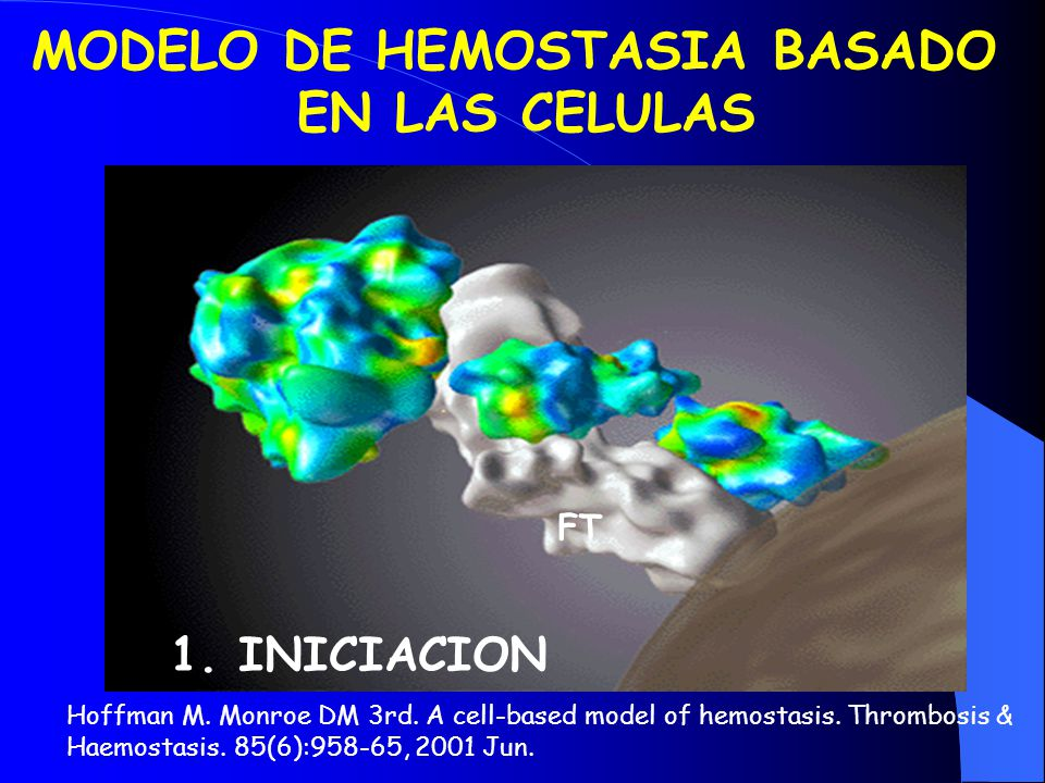 MODELO DE HEMOSTASIA BASADO