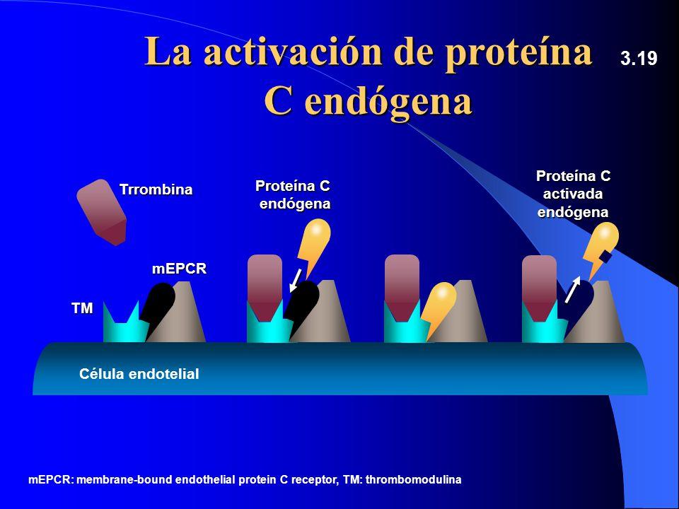 La activación de proteína C endógena