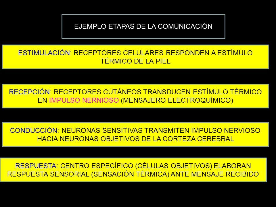 EJEMPLO ETAPAS DE LA COMUNICACIÓN