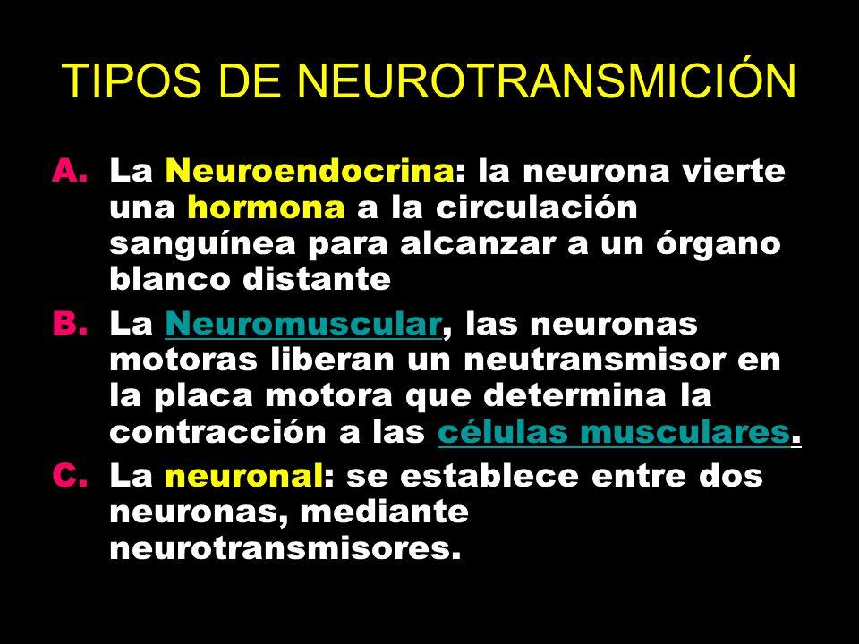 TIPOS DE NEUROTRANSMICIÓN