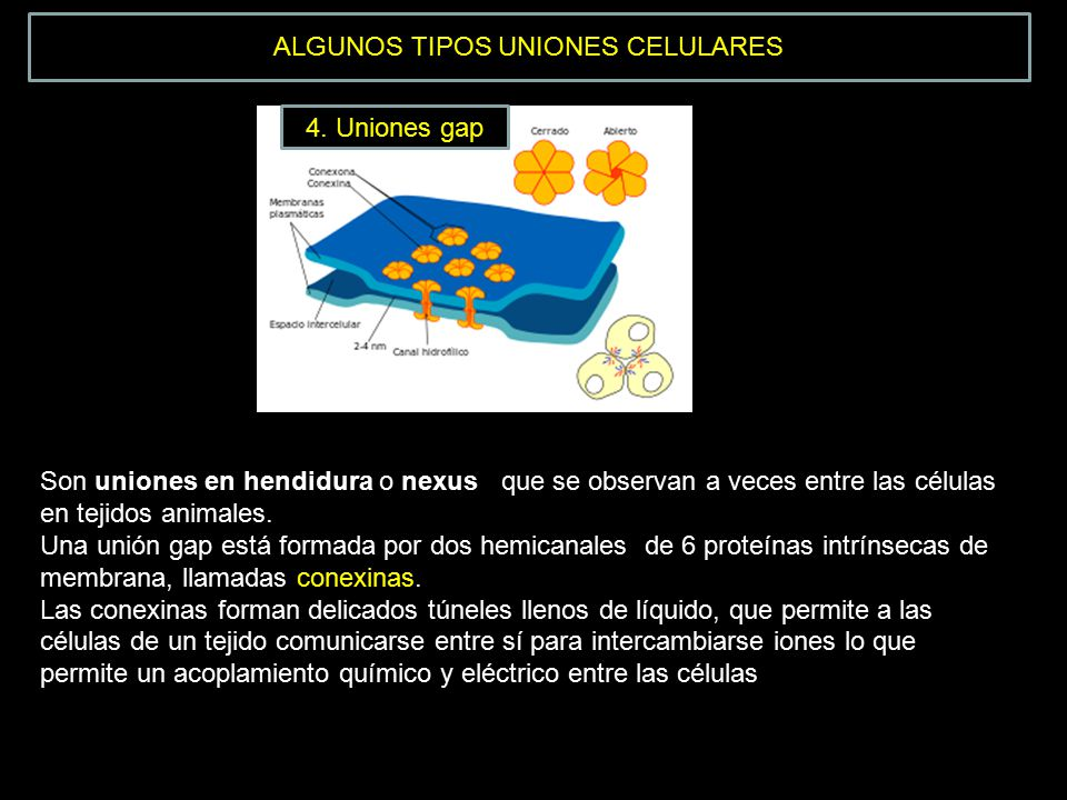 ALGUNOS TIPOS UNIONES CELULARES