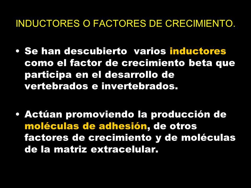INDUCTORES O FACTORES DE CRECIMIENTO.