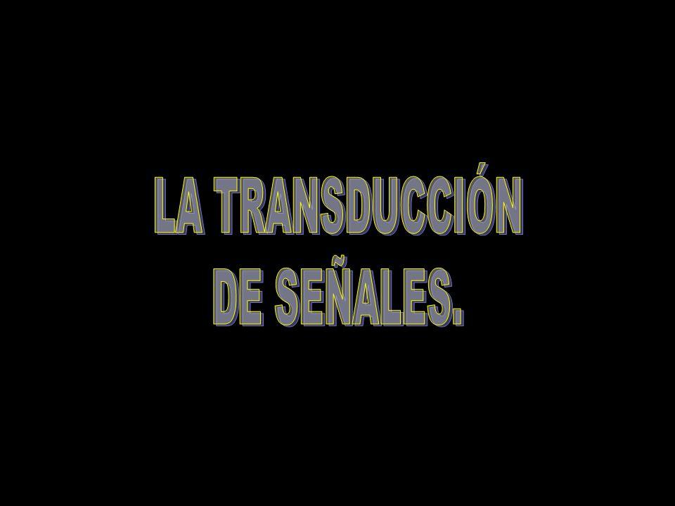 LA TRANSDUCCIÓN DE SEÑALES.
