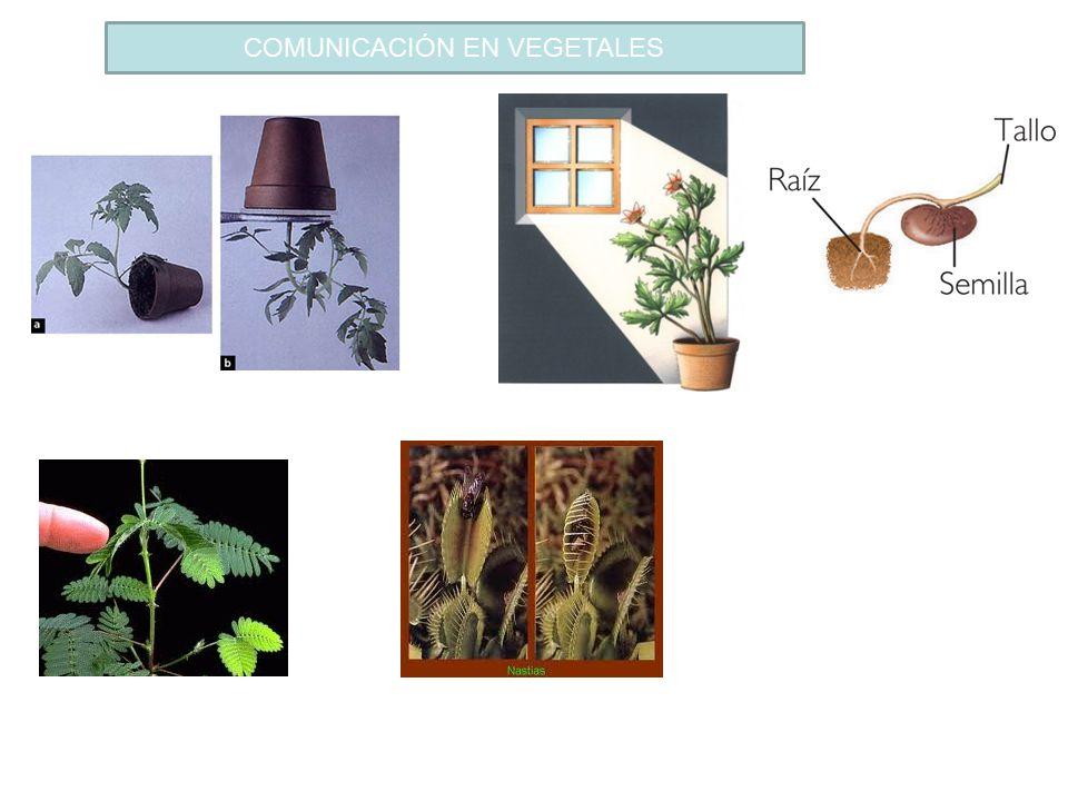 COMUNICACIÓN EN VEGETALES