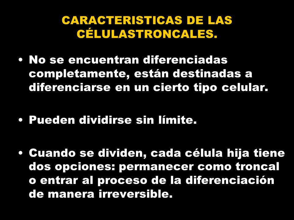 CARACTERISTICAS DE LAS CÉLULASTRONCALES.