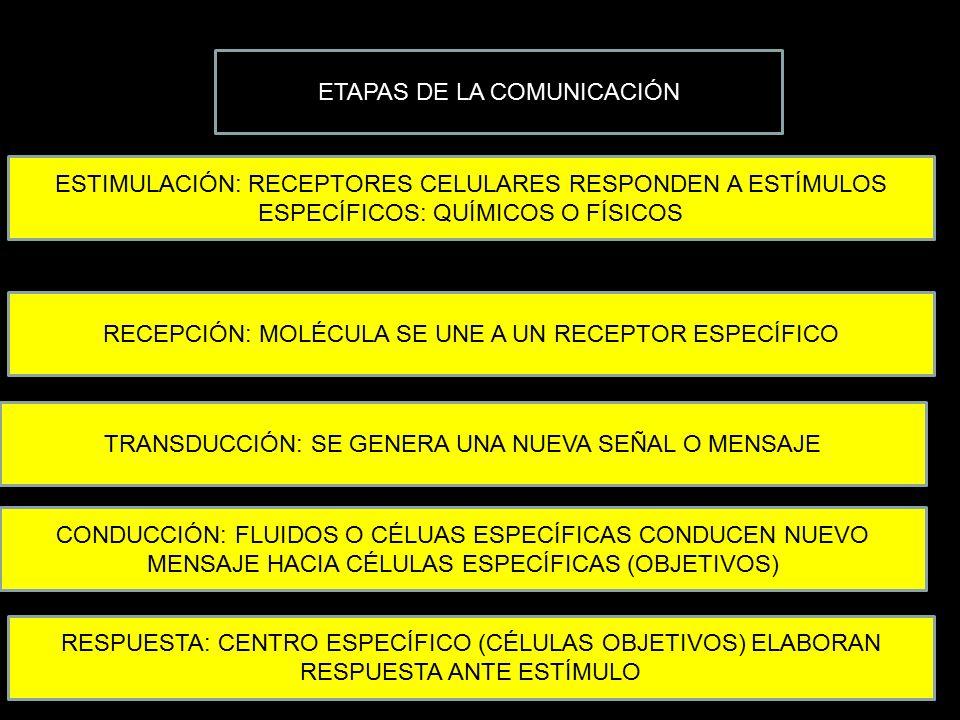 ETAPAS DE LA COMUNICACIÓN