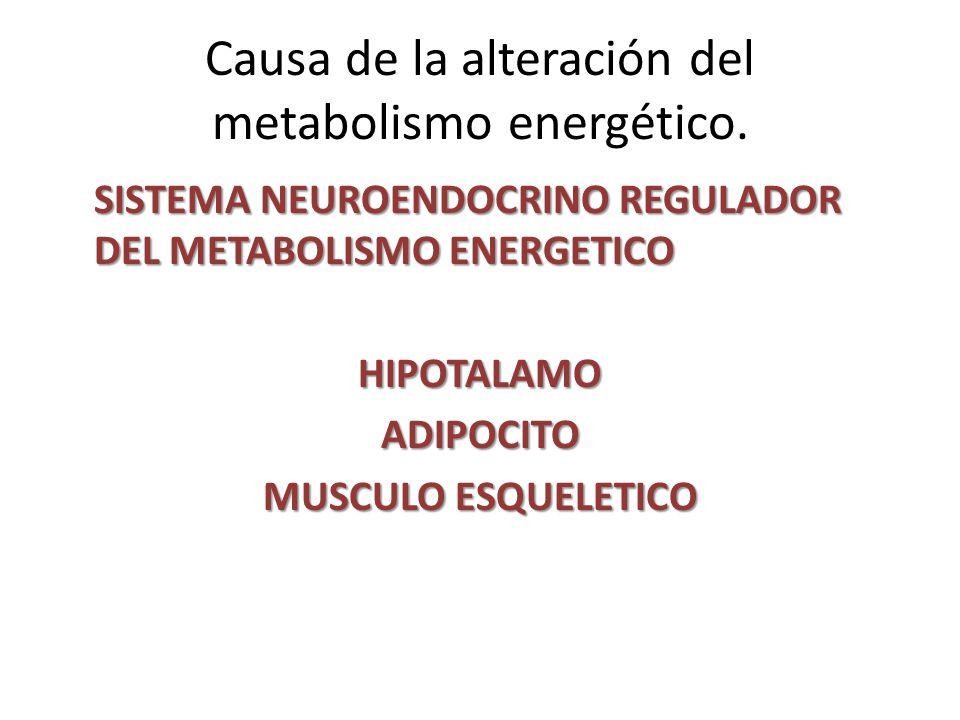 Causa de la alteración del metabolismo energético.