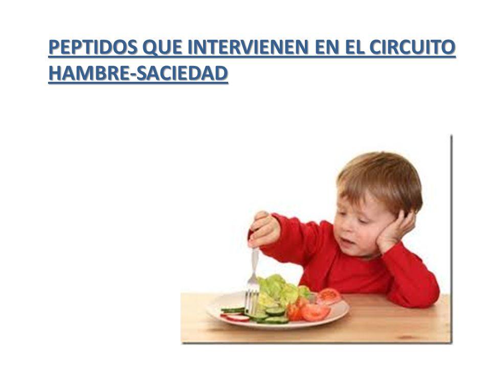 PEPTIDOS QUE INTERVIENEN EN EL CIRCUITO HAMBRE-SACIEDAD