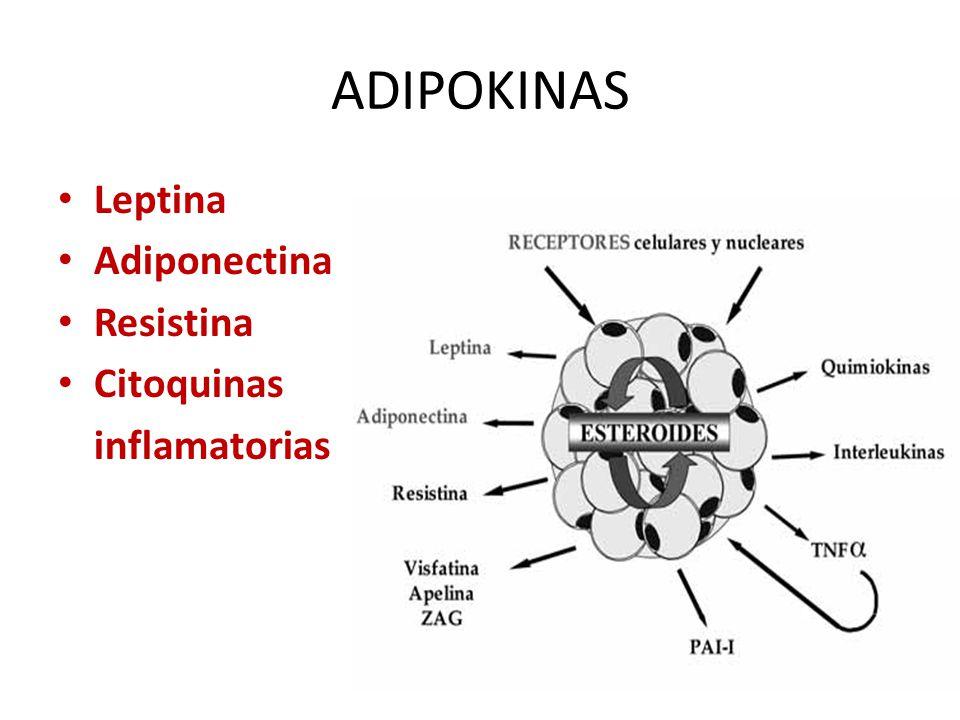 ADIPOKINAS Leptina Adiponectina Resistina Citoquinas inflamatorias