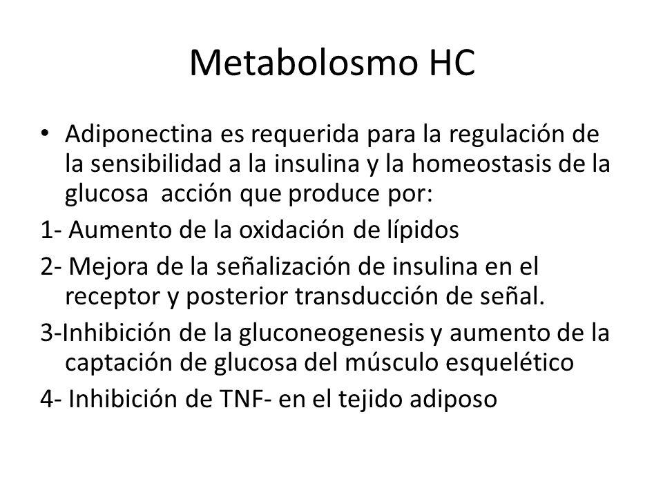 Metabolosmo HC Adiponectina es requerida para la regulación de la sensibilidad a la insulina y la homeostasis de la glucosa acción que produce por:
