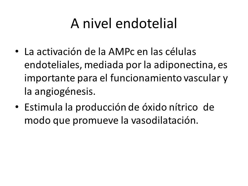 A nivel endotelial