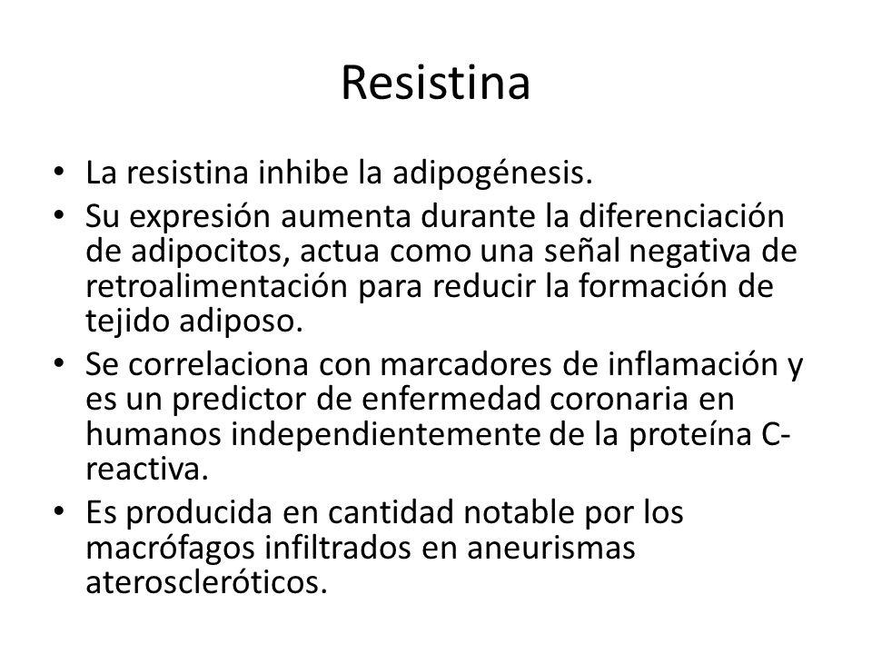 Resistina La resistina inhibe la adipogénesis.