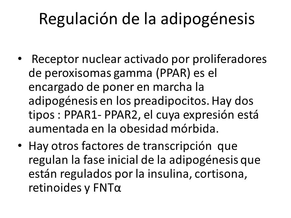Regulación de la adipogénesis