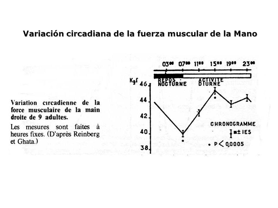 Variación circadiana de la fuerza muscular de la Mano