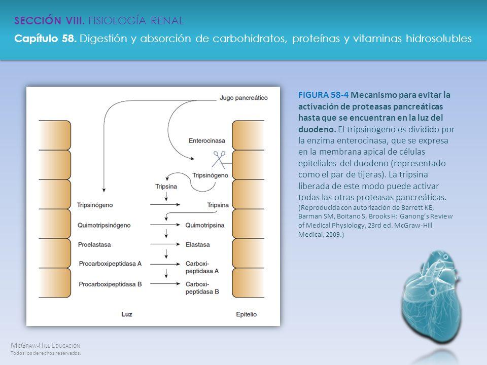 FIGURA 58-4 Mecanismo para evitar la activación de proteasas pancreáticas hasta que se encuentran en la luz del duodeno.