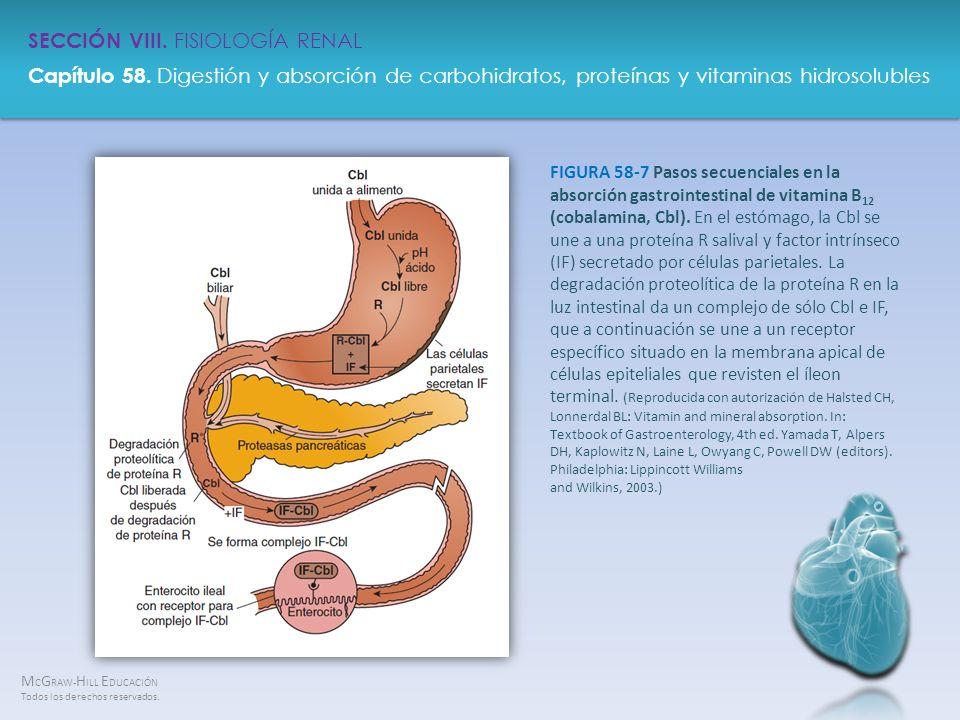 FIGURA 58-7 Pasos secuenciales en la absorción gastrointestinal de vitamina B12 (cobalamina, Cbl).