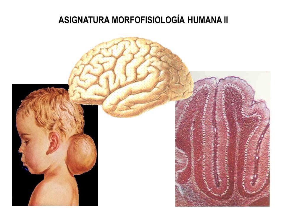 ASIGNATURA MORFOFISIOLOGÍA HUMANA II