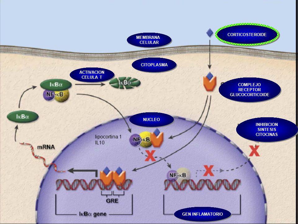 El mecanismo molecular involucrado en la acción