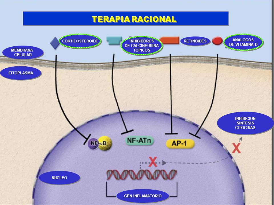 TERAPIA RACIONAL However, they possess a commonality:
