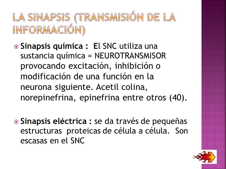 La sinapsis (transmisión de la información)