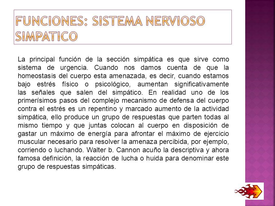 Funciones: Sistema Nervioso SIMPATICO