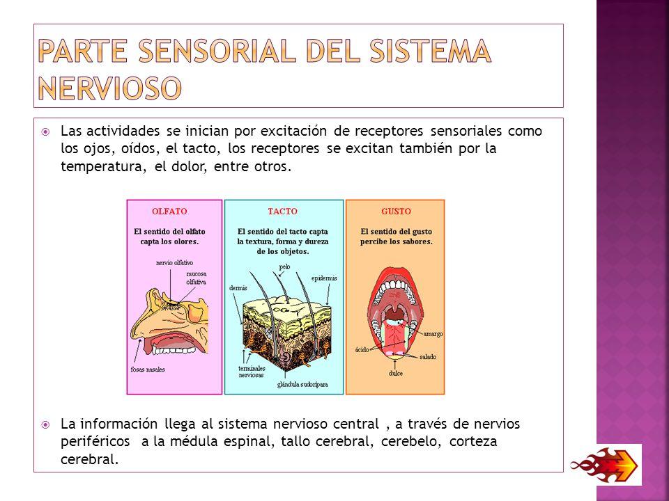 PARTE SENSORIAL DEL Sistema Nervioso
