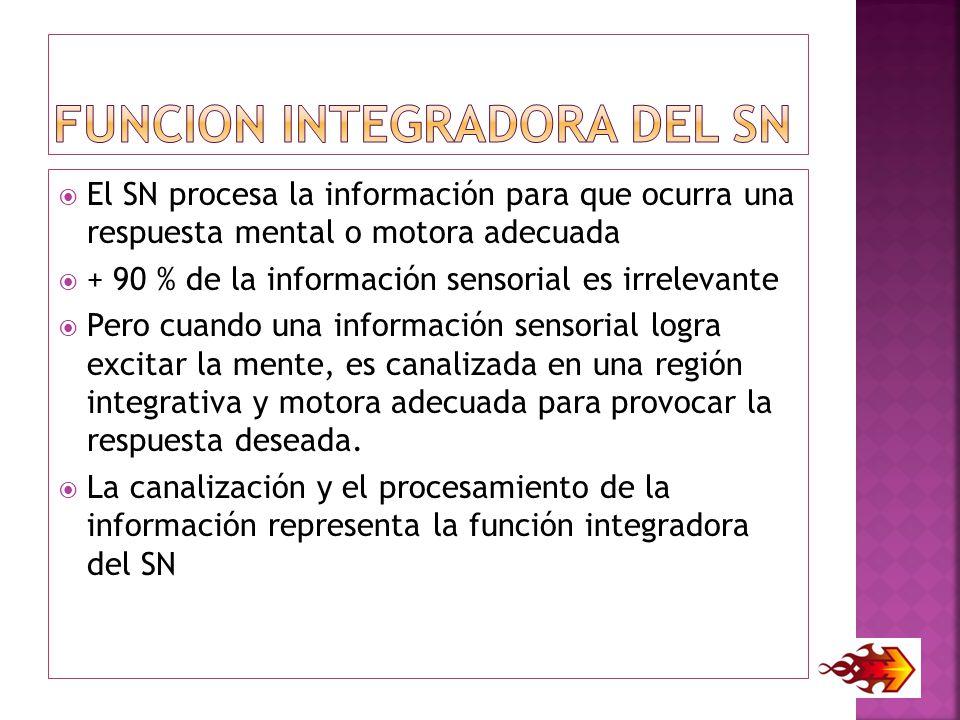 FUNCION INTEGRADORA DEL SN