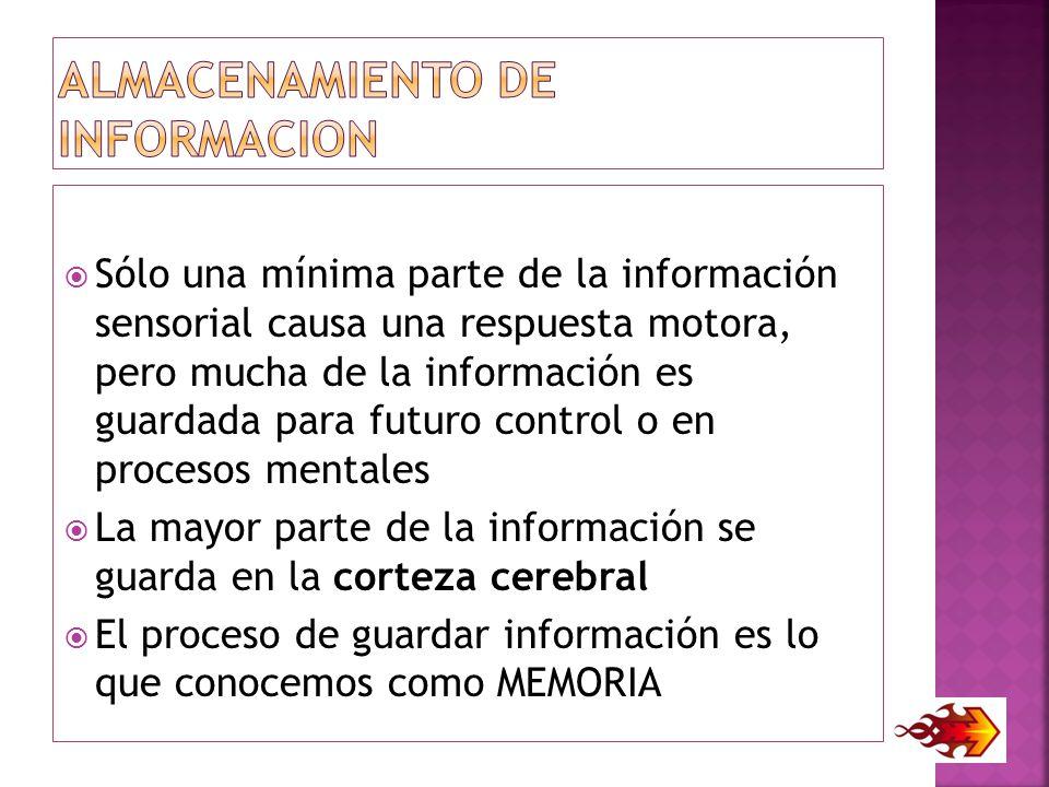 ALMACENAMIENTO DE INFORMACION