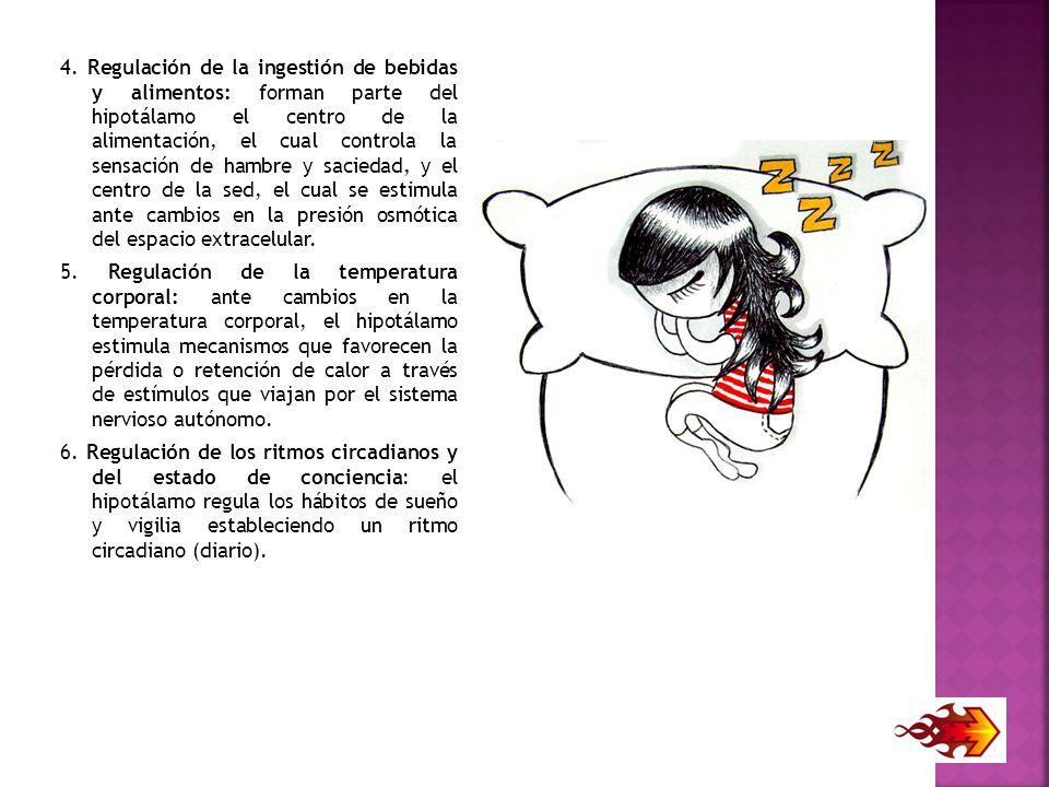 4. Regulación de la ingestión de bebidas y alimentos: forman parte del hipotálamo el centro de la alimentación, el cual controla la sensación de hambre y saciedad, y el centro de la sed, el cual se estimula ante cambios en la presión osmótica del espacio extracelular.