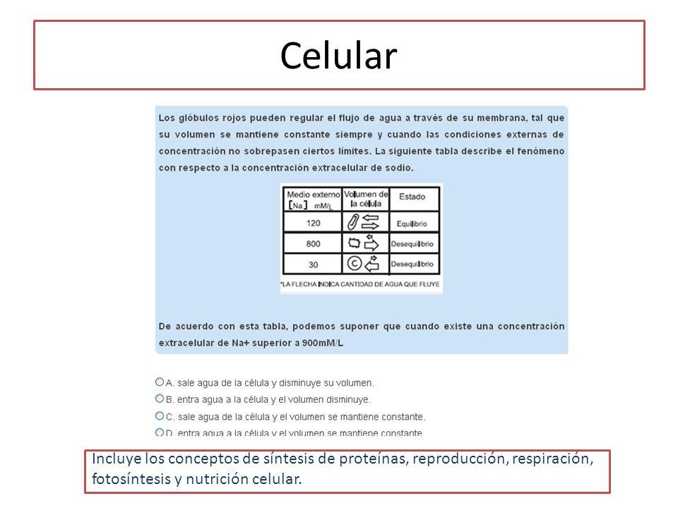 Celular Incluye los conceptos de síntesis de proteínas, reproducción, respiración, fotosíntesis y nutrición celular.