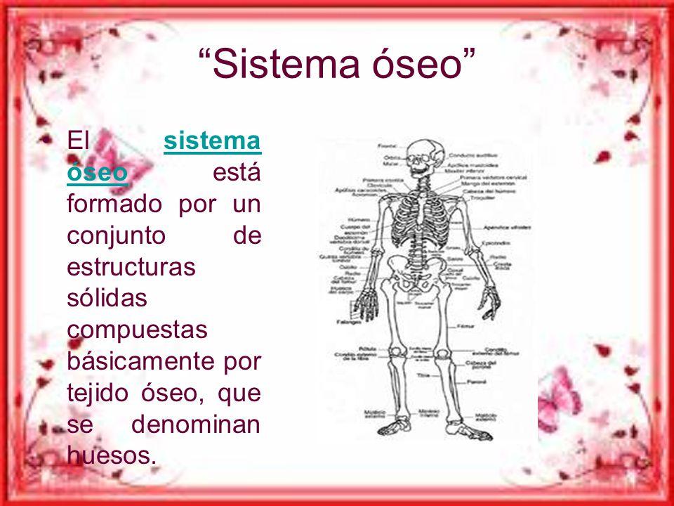 Sistema óseo El sistema óseo está formado por un conjunto de estructuras sólidas compuestas básicamente por tejido óseo, que se denominan huesos.