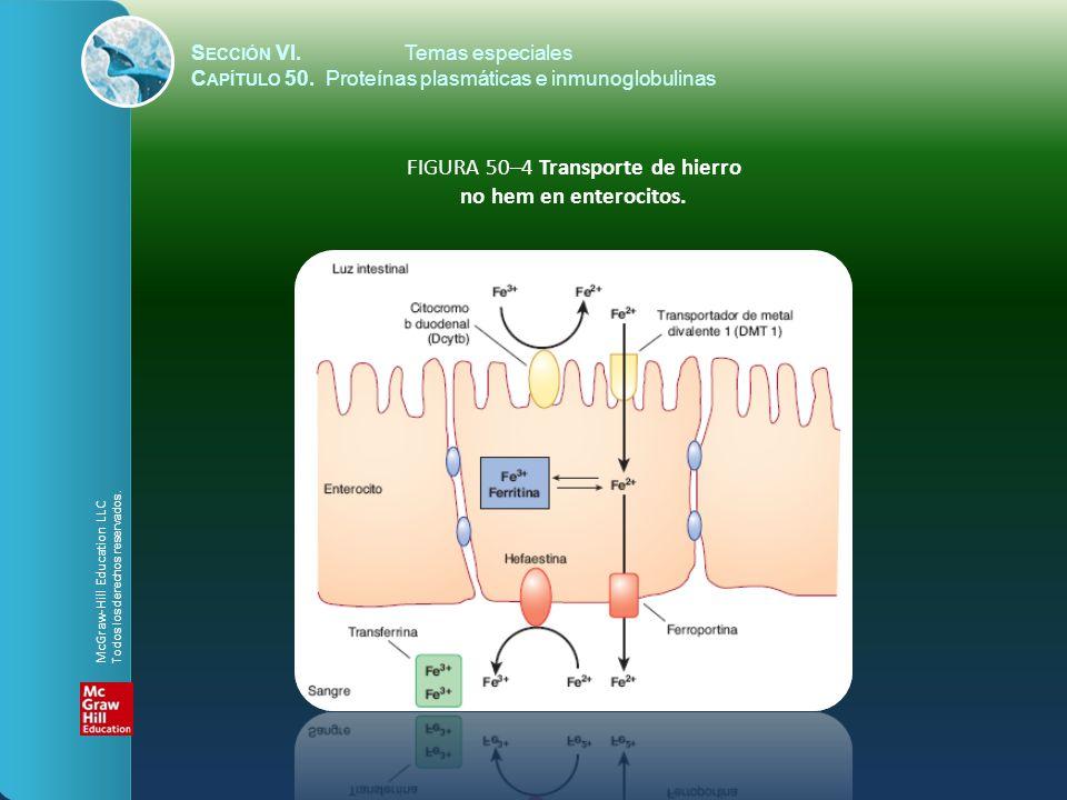 FIGURA 50–4 Transporte de hierro no hem en enterocitos.