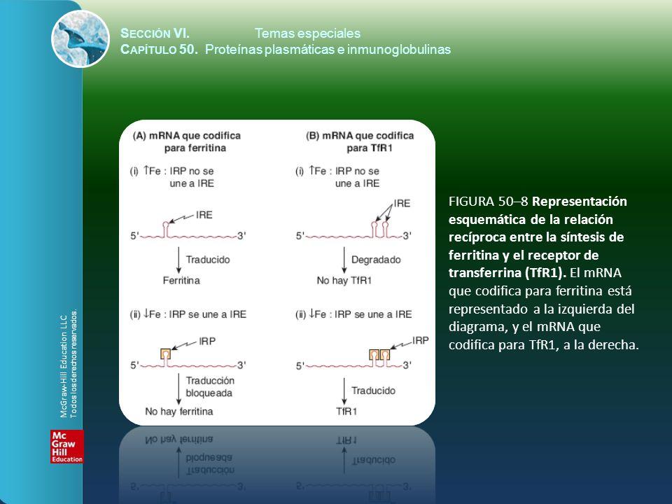 FIGURA 50–8 Representación esquemática de la relación
